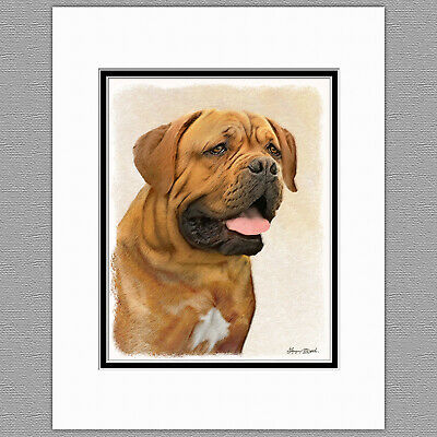Dogue de Bordeaux 8 x 10 Free Standing BREED TRAITS Picture 10x8 Dog Print Gift