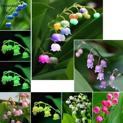 100 Pcs Colorful Lily of the Valley Convallaria Majalis Perennial Flower STTK 01