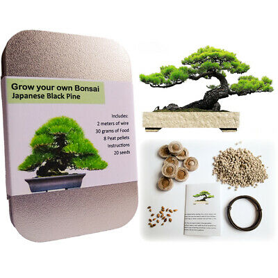 Japanese Black Pine Bonsai kit. bonsai wire seeds food peat pellets in gift tin