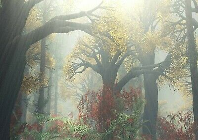 NATURE POSTER FOGGY COLORS Photo Picture Poster Print Art A0 to A4 AD972