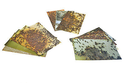 National Virtual Hive - Beehive Photos ONLY Teaching Aid,  Free P&P