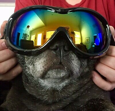 Dog Sunglasses Goggles by PetRich, Eye Wear UV Protection Adjustable FREE Ship!