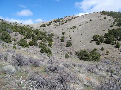 40 Acre Murdock Mountain Nevada Ranch Land $356 Month 0% -Near Utah Idaho