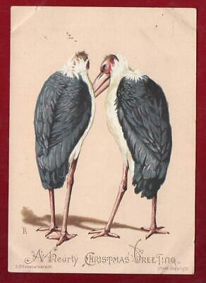Victorian TWO LARGE BIRDS   S.Hildesheimer  Christmas  Greeting Card