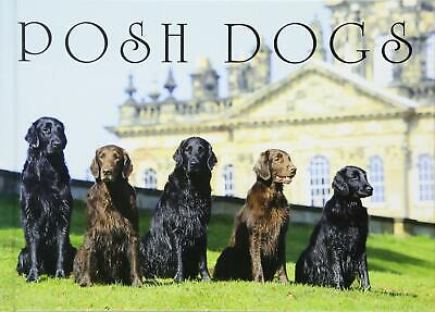 Posh Dogs by Country Life Magazine