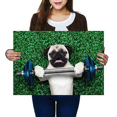 A2 | Funny Weight Lifting Pug Dog Gym Size A2 Poster Print Photo Art Gift #8587