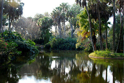 Large 5 AC Lot by Pond, Polk City, 15 mi to Disney, Florida / Pre-Foreclosure
