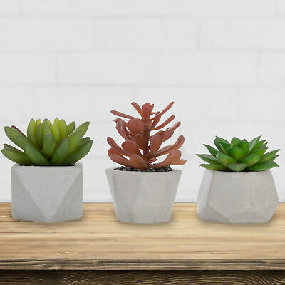Assorted Faux Succulents in Geometric Cement Planters, Set of 3 (Assortment 2)