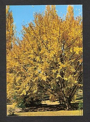 ACT - c1970s POSTCARD - AUTUMN IN CANBERRA, ACT