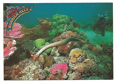 QLD - c1980s POSTCARD - OLIVE SEA SNAKE, THE GREAT BARRIER REEF, QLD