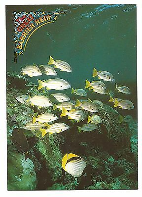 QLD - c1980s POSTCARD - A SCHOOL OF REEF FISH, THE GREAT BARRIER REEF, QLD