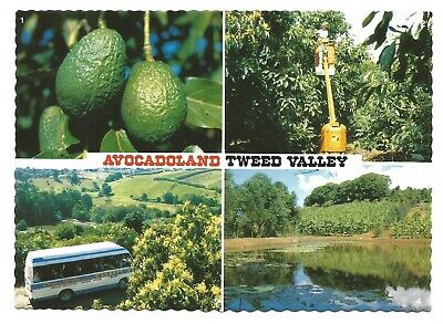 NSW - c1980s POSTCARD - AVOCADOLAND, DURANBAH, TWEED VALLEY, NEW SOUTH WALES