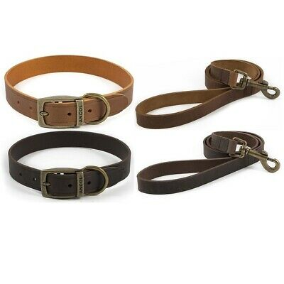 Ancol Latigo Leather Dog Collar or Lead - Puppy Heritage Polished for Soft Touch