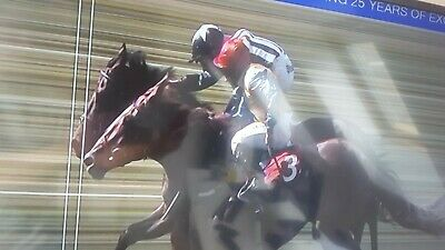 Betting system Horse, Greyhounds.  INCLUDING FREE TRIAL OF MY pay as you win tip