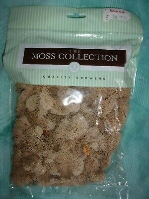 New Package of Reindeer Moss for Crafting by Quality Growers