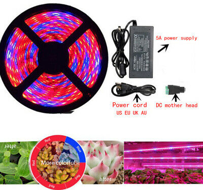 High Quality Plastic 60LED/M Grow Lamp Full With  DC Connector+12V 5A Power