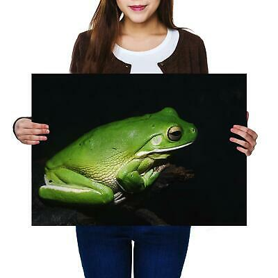 A2 | Tree Frog Green Wildlife Nature Size A2 Poster Print Photo Art Gift #12752