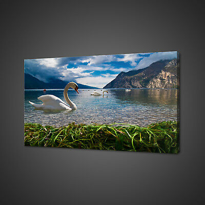 BEAUTIFUL HEAVEN ON EARTH SWAN LAKE CANVAS PRINT WALL ART PICTURE PHOTO