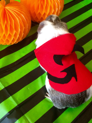 guinea pig costume- devil. Halloween pet costume