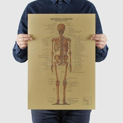The Human Skeleton Photo Picture Anatomy Skeletal System Human Poster Exquisite