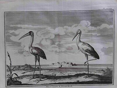 Very Rare zoological, 16th cent, Claude Perrault, titled 'Ibis it Cigogne'
