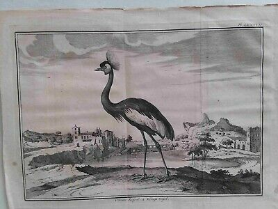 Very Rare zoological print, 16th cent, Claude Perrault, titled 'Oiseau Royal'