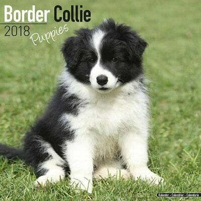 Calendrier Border Collie Puppies 2018