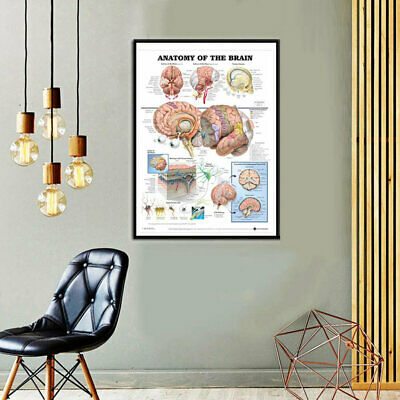 Fashion Anatomy Of The Brain Poster Anatomical Silk Cloth Chart Human Body Great