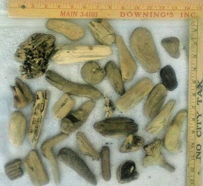 Lot of Assorted Small Pacific NW Driftwood Pieces-Craft Items, 30+ Pieces