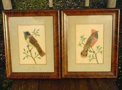 1900s WW1 ERA WATERCOLOUR PAINTINGS-BIRD FEATHERS-Sgnd.ENGINEER S.S.PORT HARDY