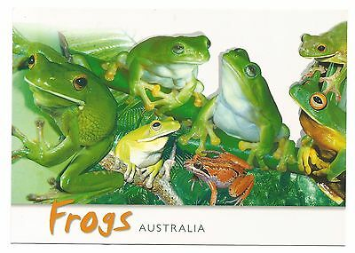 QLD - c2000s POSTCARD - FROGS AUSTRALIA FOUND IN RAINFORESTS OF NORTH QUEENSLAND