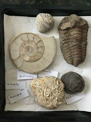 Five Fossils Of Interest