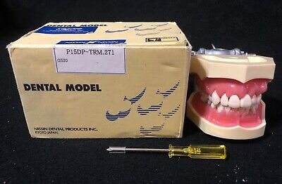 Kilgore Nissin Dental Hygiene Teaching Model P15DP-TRM.271