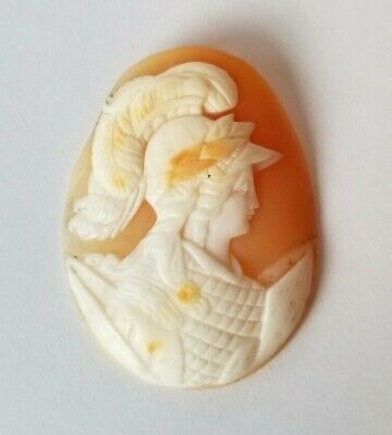 Antique Unmounted Hand Carved Shell Cameo of Athena Minerva Full Battle Gear