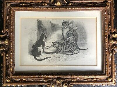 Antique Prints Of Cats And Mice X 2