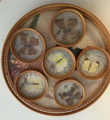 Vintage Wicker Bamboo Taxidermy Butterfly Moths Drinks tray & 6 coasters Boho.