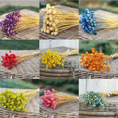 50PCS/Bouquet Happy Flower Dried Real Flowers Natural Material Props Bunch Decor