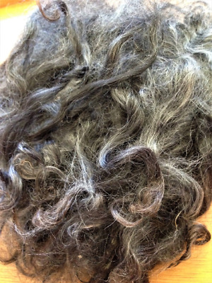 Suri Alpaca Locks Fibre Wool - 65gm - Washed - Spinning Felting