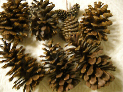 """9 Pine Cones Round Natural Crafts Wreaths Decor 2""""- 6'' tall"""