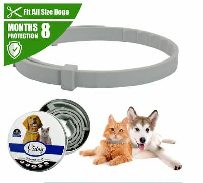 Bayer seresto Dogs Cats Up to 8* Month Flea and Tick Collar 2019 - Free Shipping