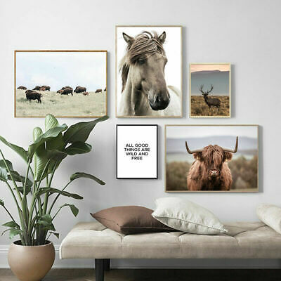 Highland Cow Field Nature Nordic Canvas Poster Scandinavian Style Wall Art Print