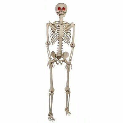 5 ft. Halloween Life Size Skeleton LED Lit Eyes Hanging Prop Haunted House Decor