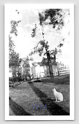 A Cat's Mysterious Perception - Abstract Double Exposure Vtg Photo Snapshot