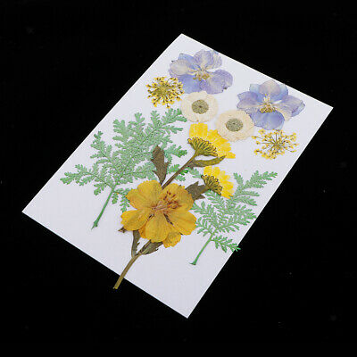 25x Natural Pressed Dried Flowers Plant DIY Phone Case Jewelry Resin Craft