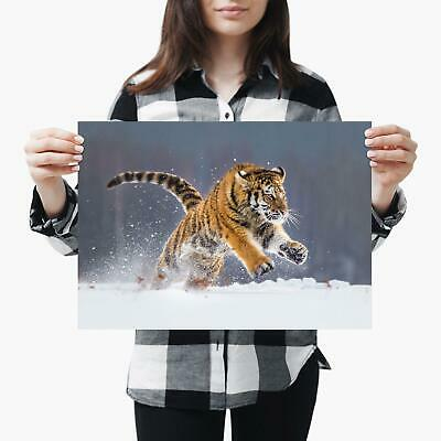 A3  Hunting Siberian Tiger Snow Cat - Size A3 Poster Print Photo Art Gift #2768