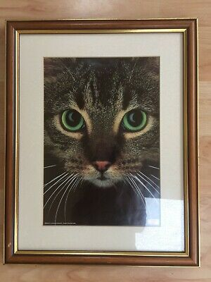 Framed picture of cat - Whiskas 1989