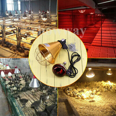 Heat Lamp Poultry Puppies Dog Kittens Piglets Animals With