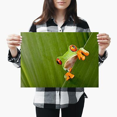 A3| Green Red Eyed Tree Frog Nature - Size A3 Poster Print Photo Art Gift #3682