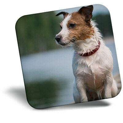 Jack Russell Terrier Keyring Dog Puppy Beach Funny Cute Pet Keyring Gift #8813