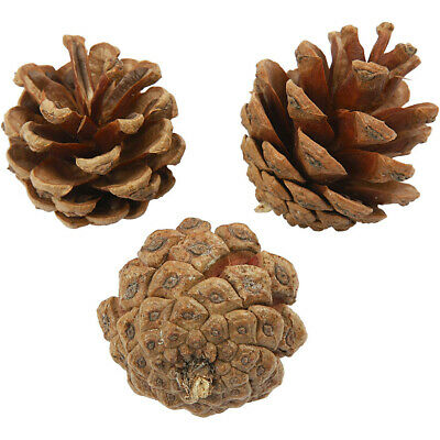 Natural Pine Cones Approx 40mm in Assorted Pack Sizes for Crafts